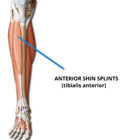anterior shin splints - shin splints clinic, Cephalic Vein